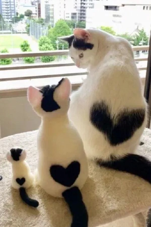 Cat With Heart Shaped Marking Is Melting H E A R T S En 2020
