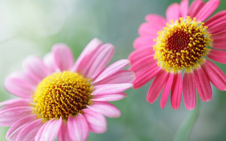 World's Top 100 Beautiful Flowers Images Wallpaper Photos Free ...