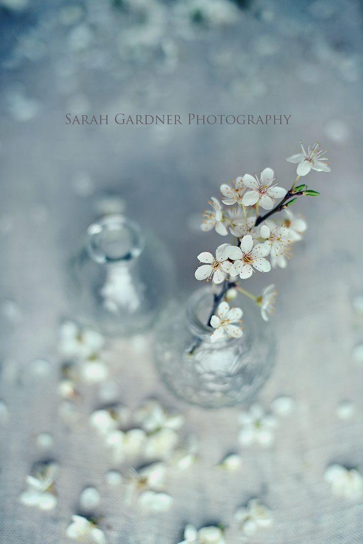 Photography by Sarah Gardner http://www.sarahgardnerphotography.com