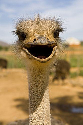 Look at that smile! In Oudtshoorn, Western Cape.