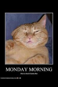 Monday Morning: Happy Mondays, Funny Sayings, Funny Pics, Funny Mondays, Funny Cat, Funny Pictures, Mondays Mornings, Grumpy Cat, Animal