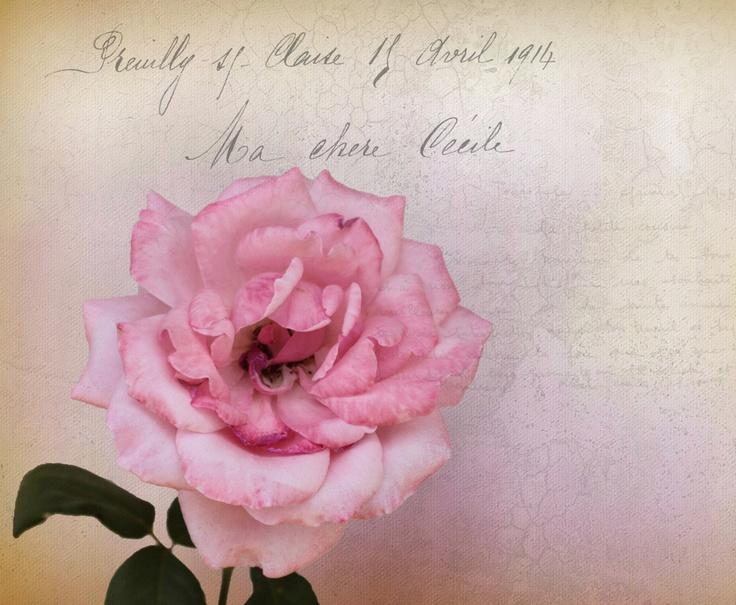 Pink by susan spinola, via 500px