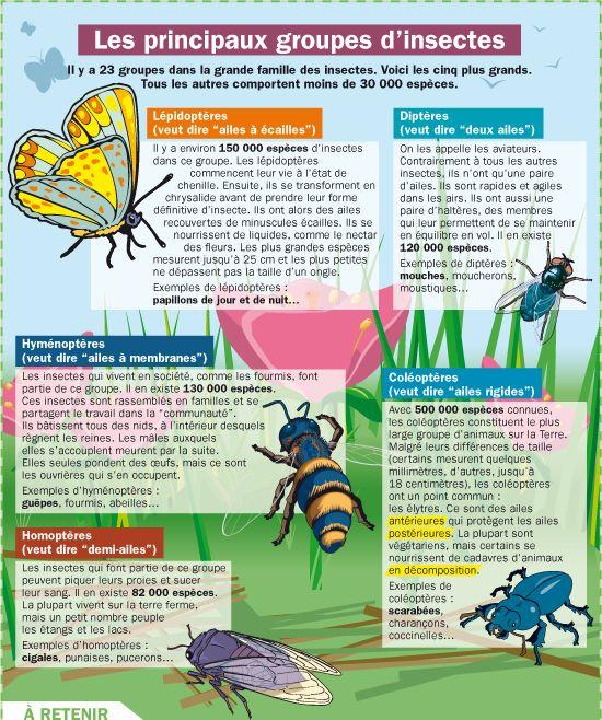 Fiche exposés : Les principaux groupes d'insectes