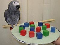 "Alex (parrot) - ""She also reported that Alex had the intelligence of a five-year-old human[3] and had not even reached his full potential by the time he died.[6] She said that the bird had the emotional level of a human two-year-old at the time of his death.[7]"" ""Alex's last words to Pepperberg were: ""You be good, See you tomorrow. I love you."""