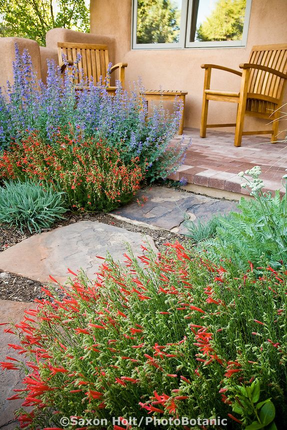 189 Best Images About Desert Landscaping On Pinterest