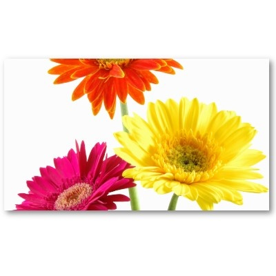 Gerbera Daisies Business Card  by bonfirenature: Business Card, Iphone Cases, Gerbera Daisies, Gerbera Daisy, Delight Stamp, Greeting Card, Delight Iphone, Flower