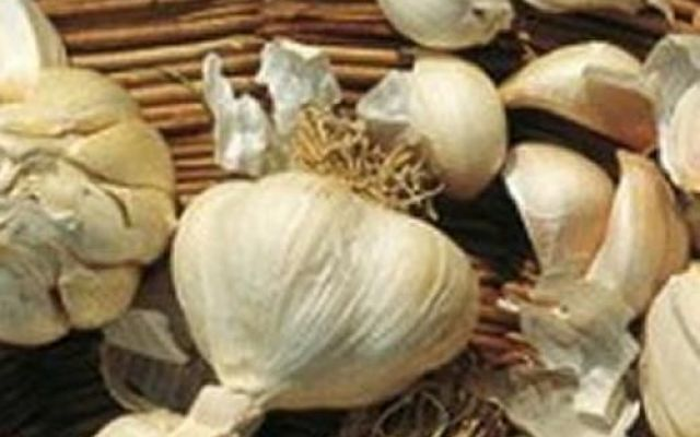 Un potente antiparassitario biologico fatto in casa - Coltivare l'orto
