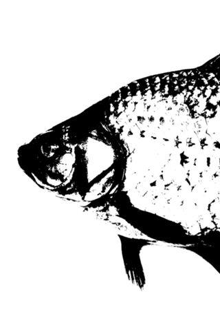 Poster Fish do Studio Rchaem por R$45,00