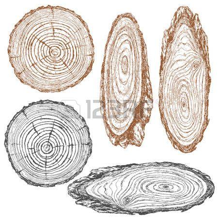 dřevo: Kulatý a oválný průřez kmene stromu. Dřevěné textury s letokruhy. Ručně kreslenou skicu.