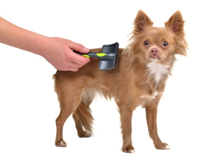 49 best pet grooming tips images on pinterest pet grooming your the best wardrobe for dog groomers solutioingenieria Gallery