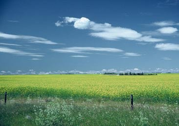 """Saskatchewan...named after the Cree name for """"swift flowing river"""" first…"""