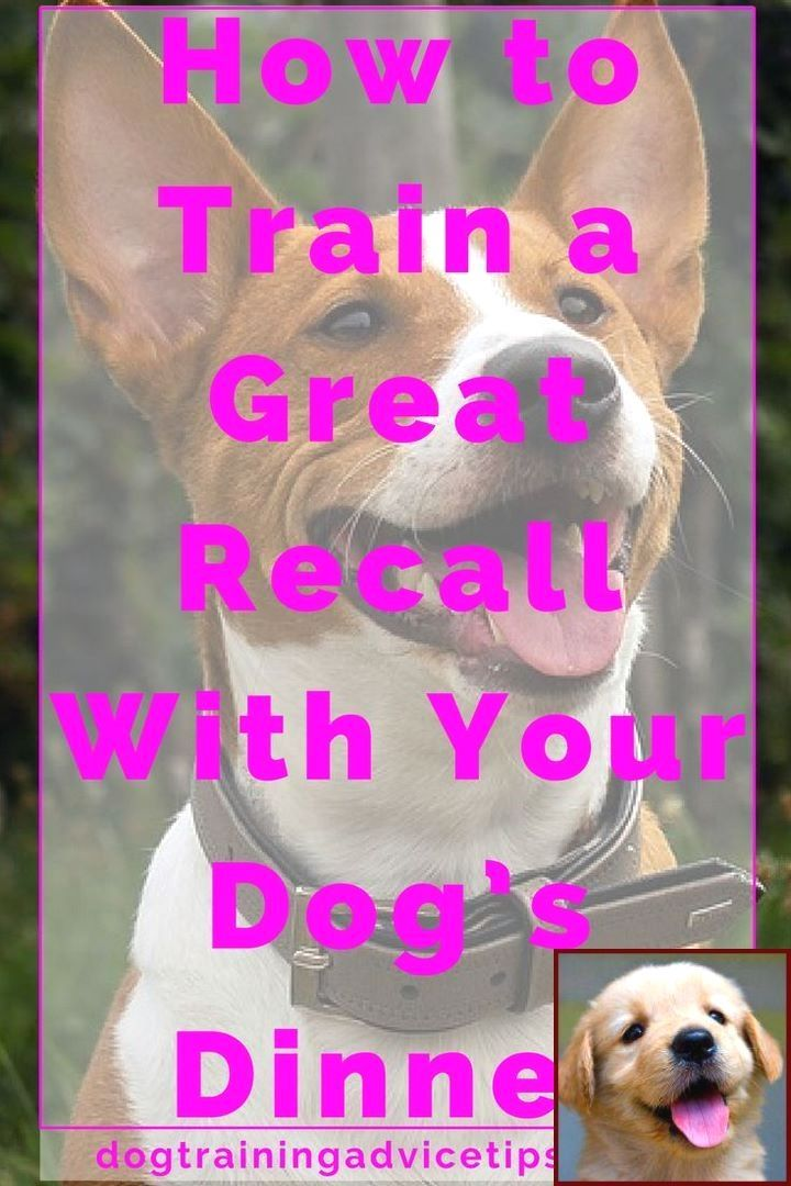 Dog Clicker Training Where To Start With Clicker Training With Images Training Your Dog Dog Clicker Training Puppy Training