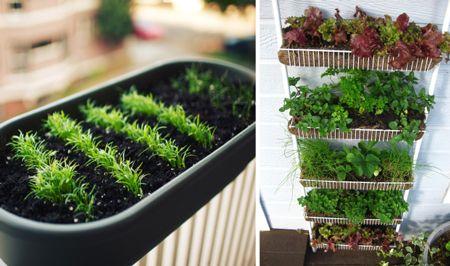 horta-organica-em-casa