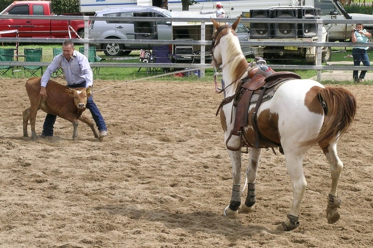 107 Best Images About Calf Roping On Pinterest Training