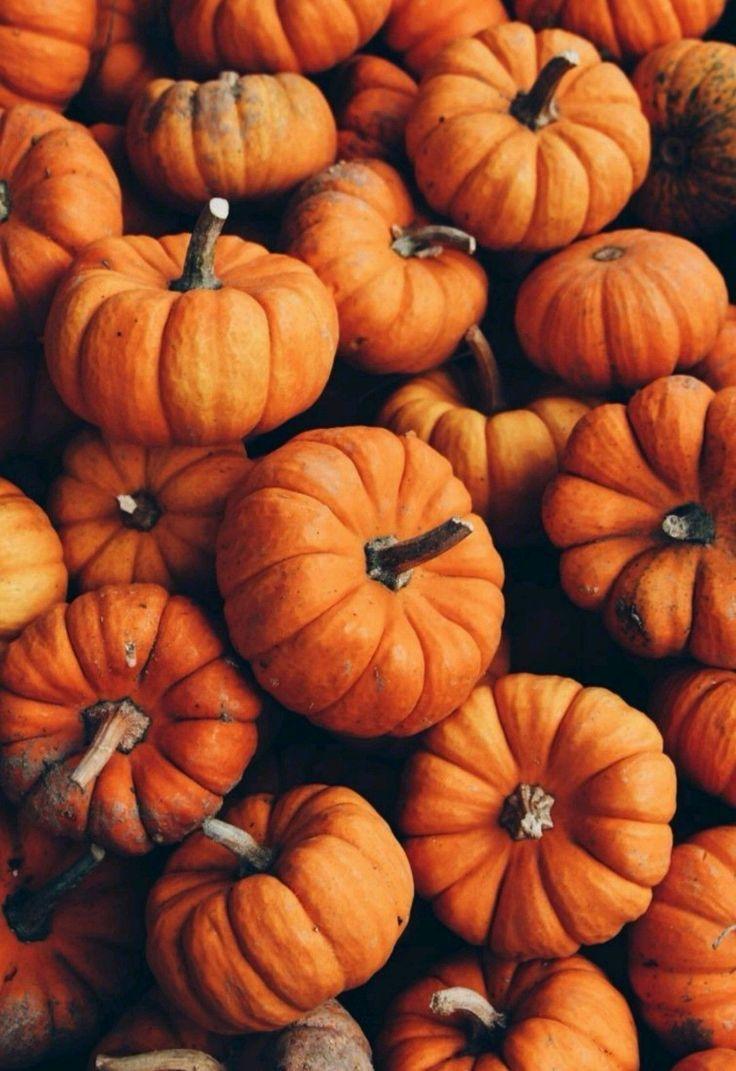 Astheticwallpaperiphonenature Autumnwallpaper Herbst Hintergrund Herbst Hintergrundbild Herbst Bilder