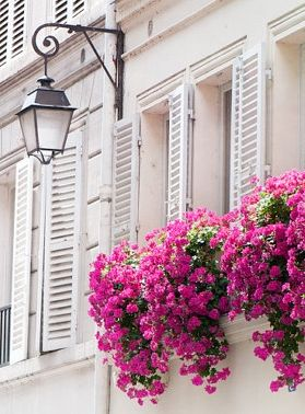 Beautiful paris apartment with shutters and pink decor