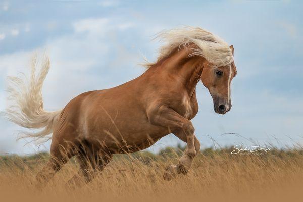 Pin Von Anna Tru Auf Pferde Pferde Tiere Pferde Bilder