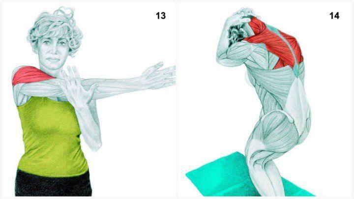 X12 13. Задействованные мышцы: боковая дельтовидная  Выполнение: выпрямите руку поперек тела и слегка надавите на ее, чтобы усилить растяжку мышцы.  14. Задействованные мышцы: трапециевидная  Выполнение: в положении стоя (ноги вместе) с выпрямленной спиной медленно отводите бедра вниз и назад, округляя спину и одновременно касаясь подбородком груди.