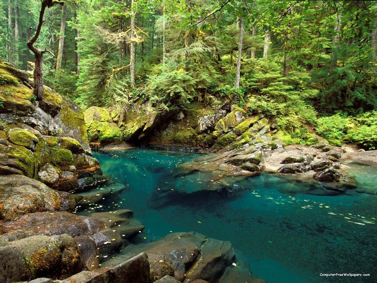 Ohanapecosh River, Mt. Rainier National Park - One of my favorite places to go camping in my local area!  I LOVE the hike to the Grove of Patriarchs & the waterfall.