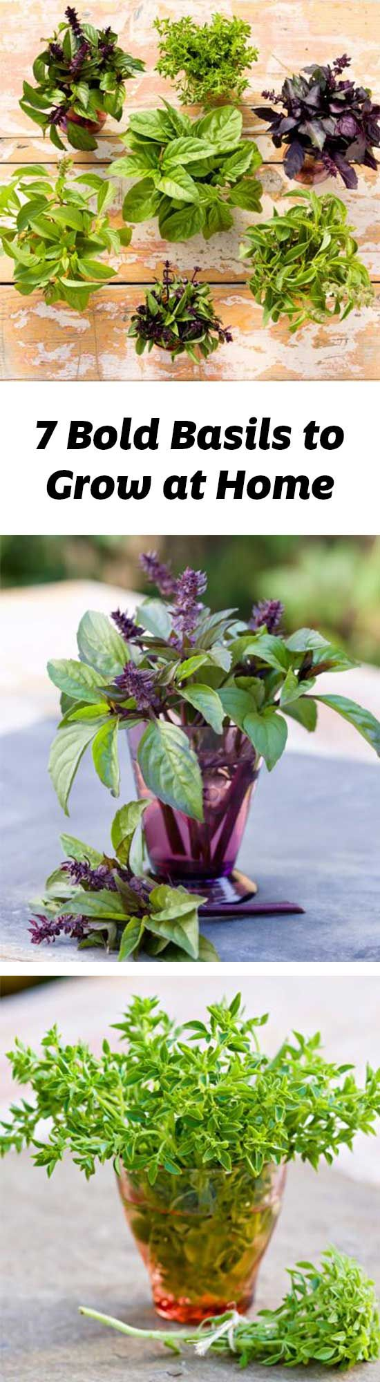 Easy-to-grow basil will thrive in a sunny window or garden spot. Try different varieties so you can experiment with adding lemony, peppery or even cinnamon-like flavor to dishes.