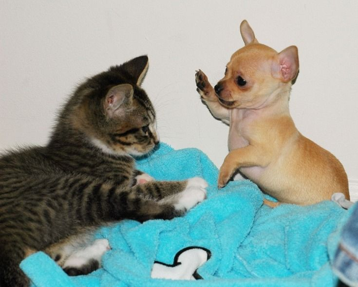 High Five  Kitten and puppy get to know each other.