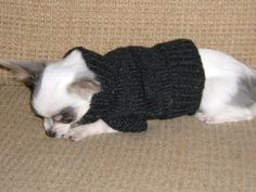 Dog Sweater for Small Dog free knitting pattern                                                                                                                                                     More