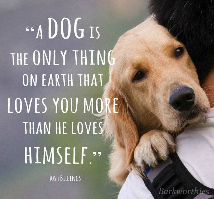 """A dog is the only thing on earth that loves you more than he loves himself."" <3"
