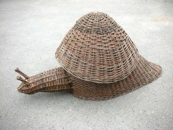 Caracol de mimbre   -   Willow Snail
