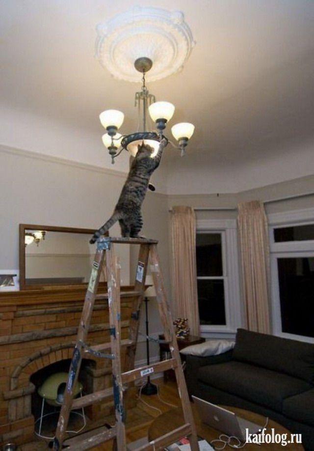 время прикольные фото ремонта квартиры забыть искусстве составления