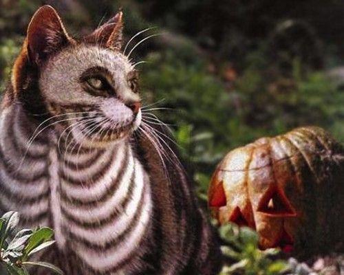15 halloween pet costumes cat skeleton halloween costumes pets - Halloween Costumes For Kittens Pets