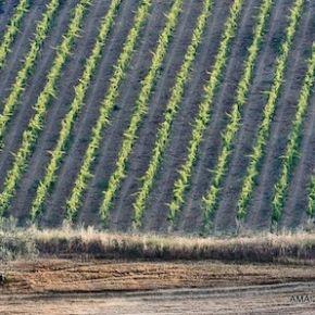 Il meglio del Montepulciano d'Abruzzo - Sei etichette in anteprima per gustarsi uno dei vini più amati e popolari del centro Italia
