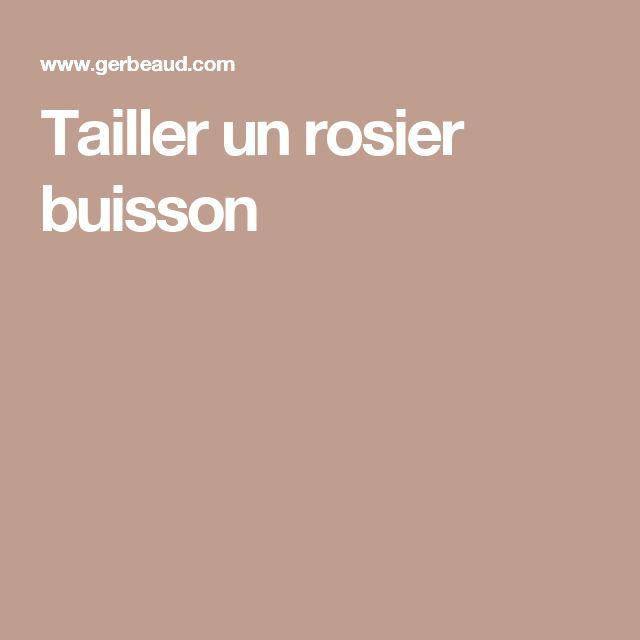 Tailler un rosier buisson