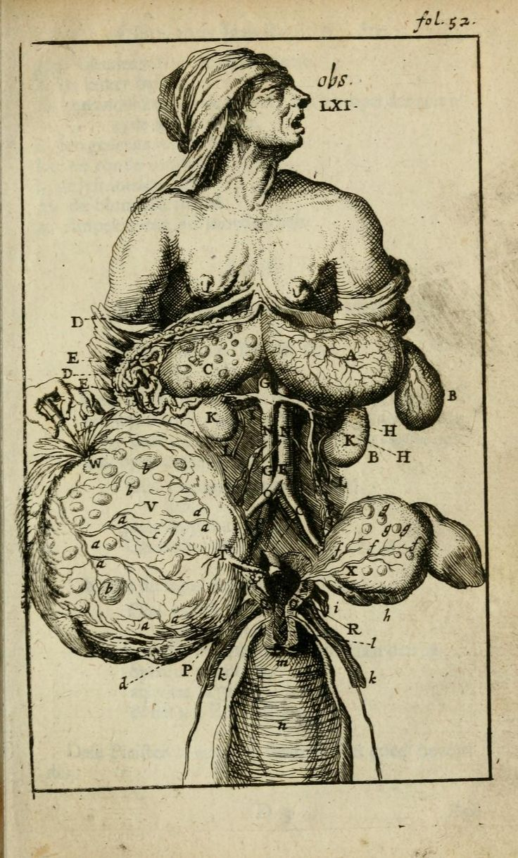 73 Best Images About Old Drawings On Pinterest Anatomy Libraries And Medicine