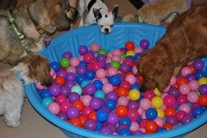 Throw a couple treats and I can't wait to see what my dog would like #ariel #dogslife #activity