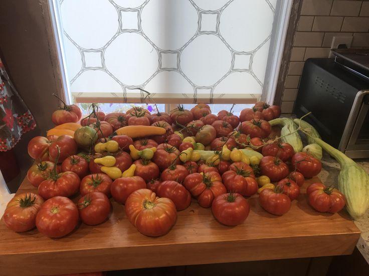 Tomatoe  golden zucchini and Armenian cucumber harvest from a few weeks ago https://i.redd.it/ovq61vj4bvuz.jpg