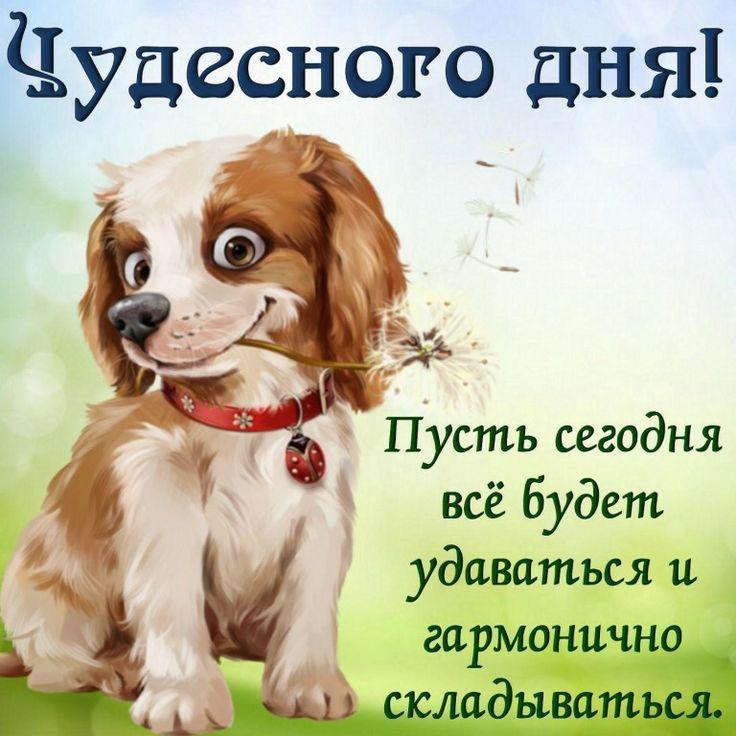 Картинки доброго дня подруга