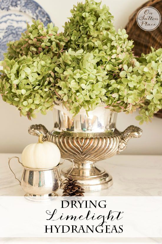 Drying Limelight Hydrangeas