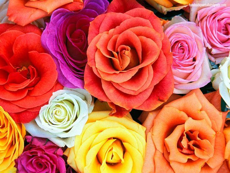 Imagenes De Flores para Descargar - Imagen en Alta Definición 3 HD Wallpapers
