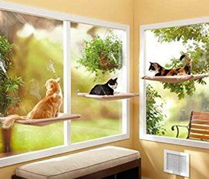 Amazon.com : Cat window mounted sunny seat-up to 25 pounds securely : Pet Supplies