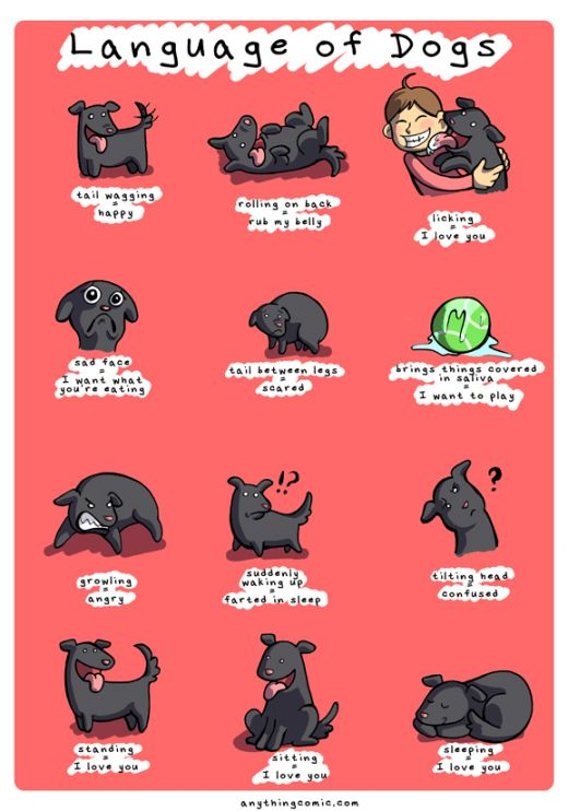 dogs language