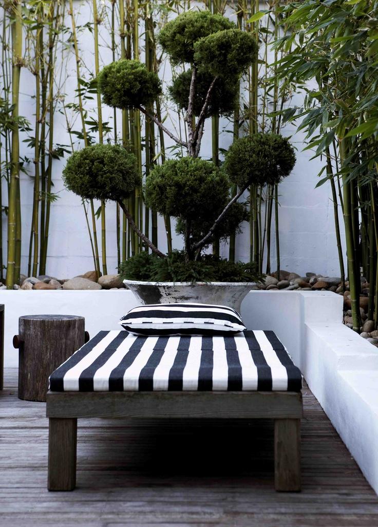 1000 Images About Awa Courtyard Gardens On Pinterest Gardenias Trachelospermum Jasminoides