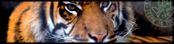 VIVERE IN SALUTE: balsamo di tigre fai da te