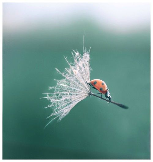:)Mary Poppins, Perfect Time Photos, Nature, A Bugs Life, Ladybugs, Seeds, Hanging Glide, Lady Bugs, Animal