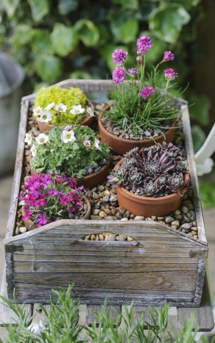 A tray with lots of small pots on