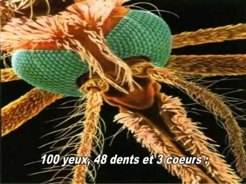 les miracles du coran prouvé scientifiquement en français , le moustique - YouTube