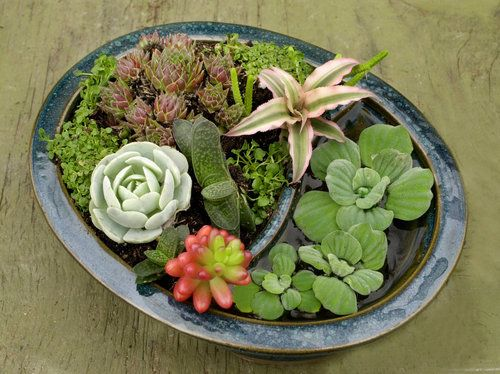 images about CactusSucculent container gardens on