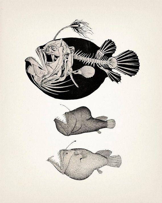 Angler Fish Skeleton - Scientific Anatomy Drawing - 8x10 Fine art print of a vintage natural history antique illustration