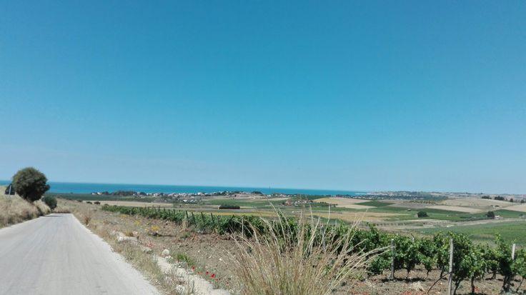 Potrei guardare questo cielo e queste vigne all'infinito, senza stancarmene mai!! #menfishire #menfi #sicily #summer