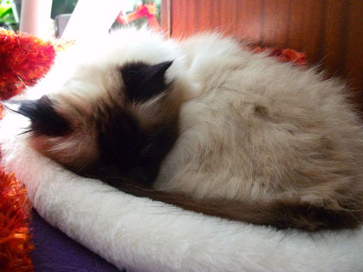 Sita snoozing on a warm autumn afternoon :)