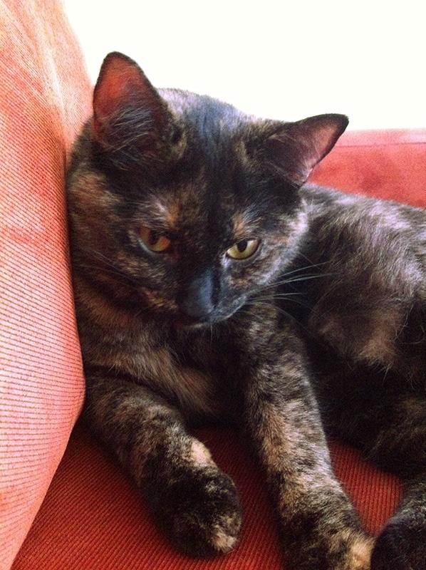 """Enzo's cat Pixel, A.K.A. """"Kitty""""."""